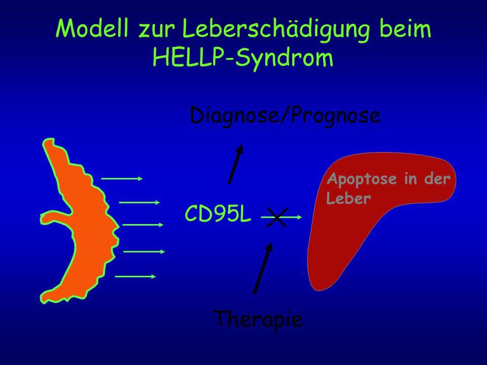 Modell zur Leberschädigung beim