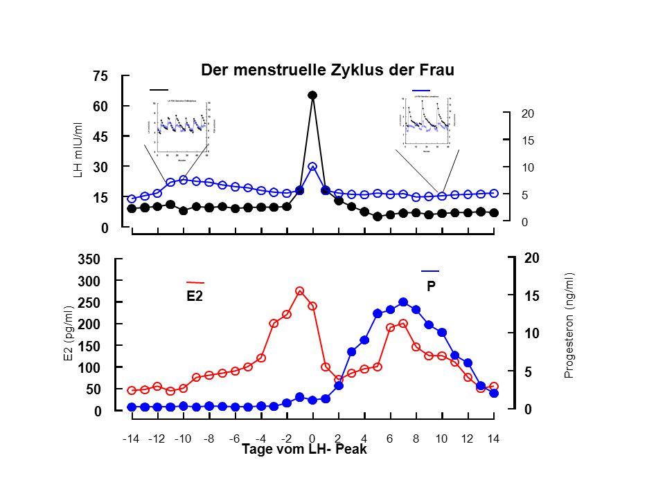 Der menstruelle Zyklus der Frau