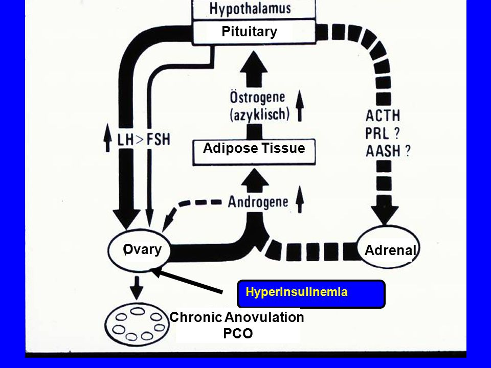 Pituitary Adrenal Chronic Anovulation PCO