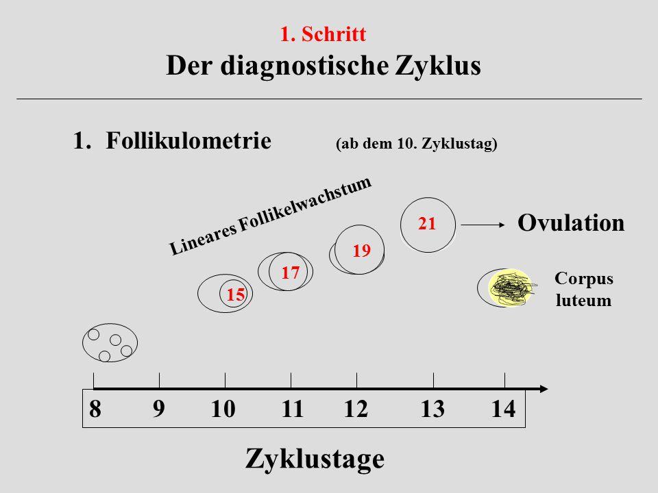 Der diagnostische Zyklus Lineares Follikelwachstum