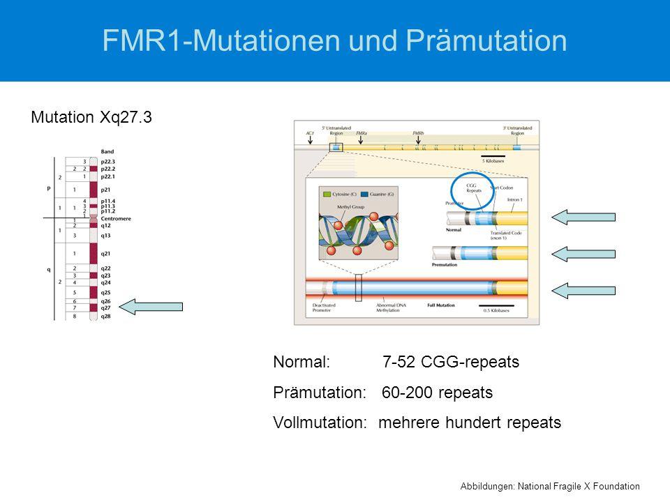 FMR1-Mutationen und Prämutation