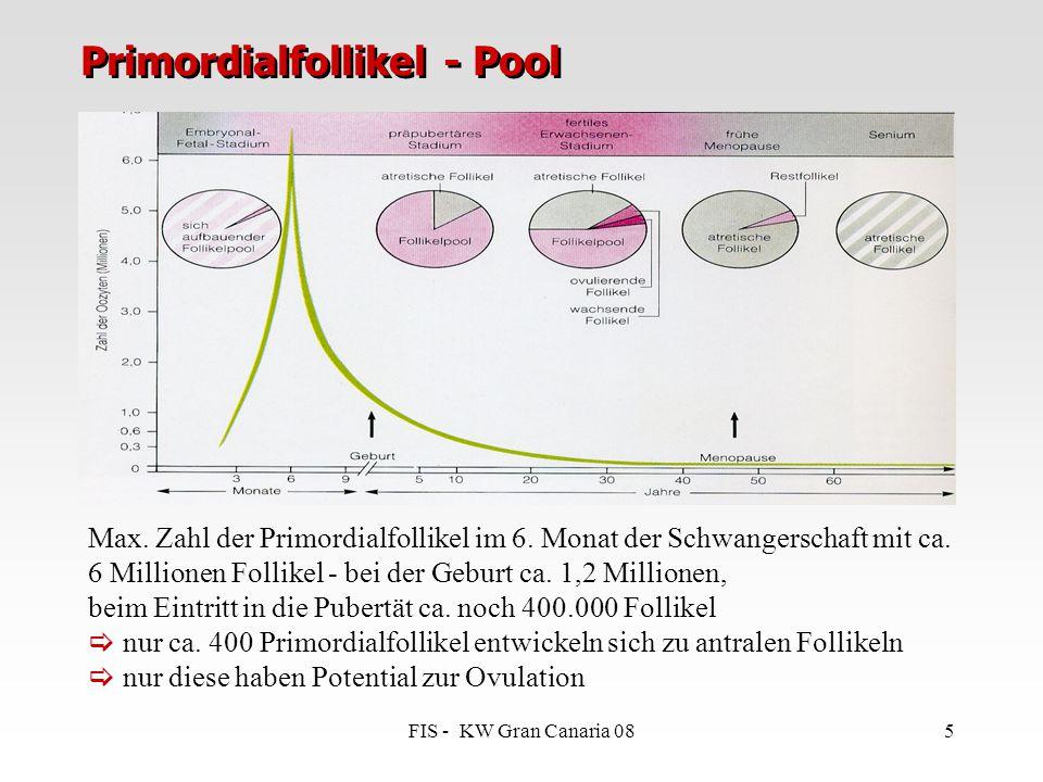 Primordialfollikel - Pool