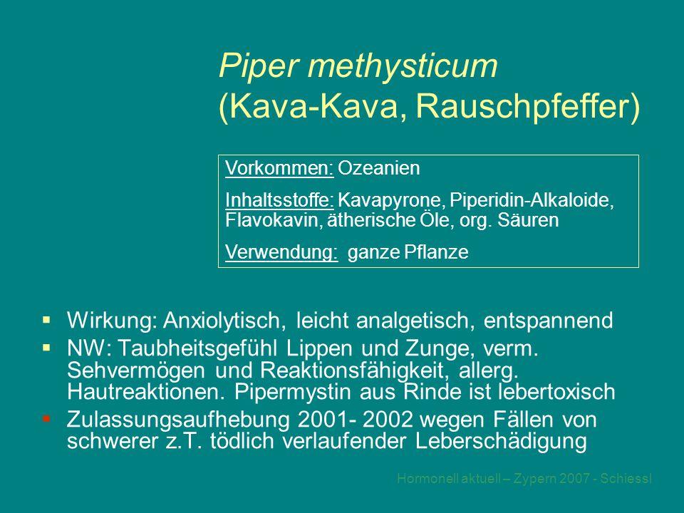 Piper methysticum (Kava-Kava, Rauschpfeffer)