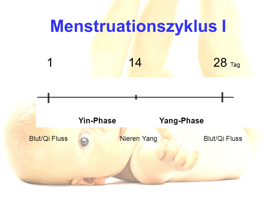 Menstruationszyklus I