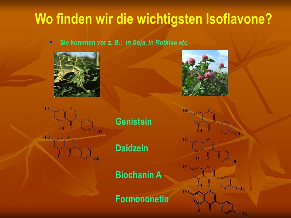 Wo finden wir die wichtigsten Isoflavone
