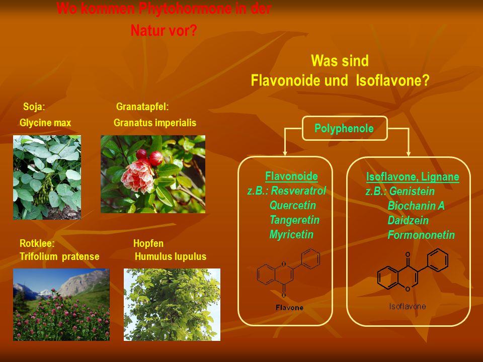 Wo kommen Phytohormone in der Natur vor