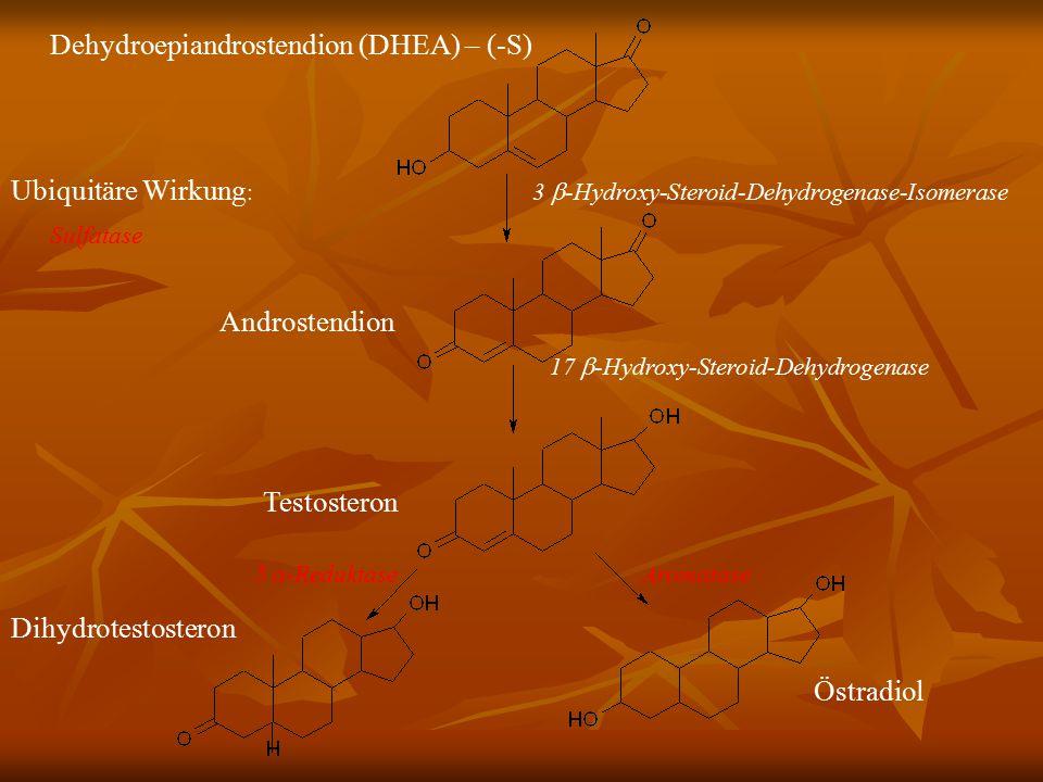 Dehydroepiandrostendion (DHEA) – (-S)