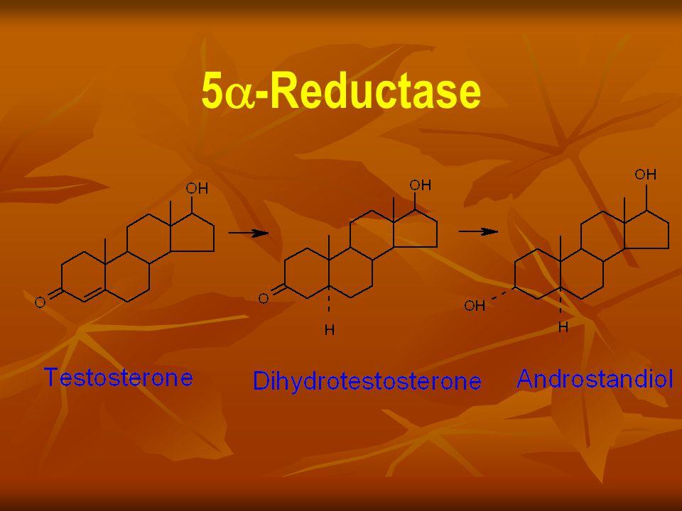 5-Reductase