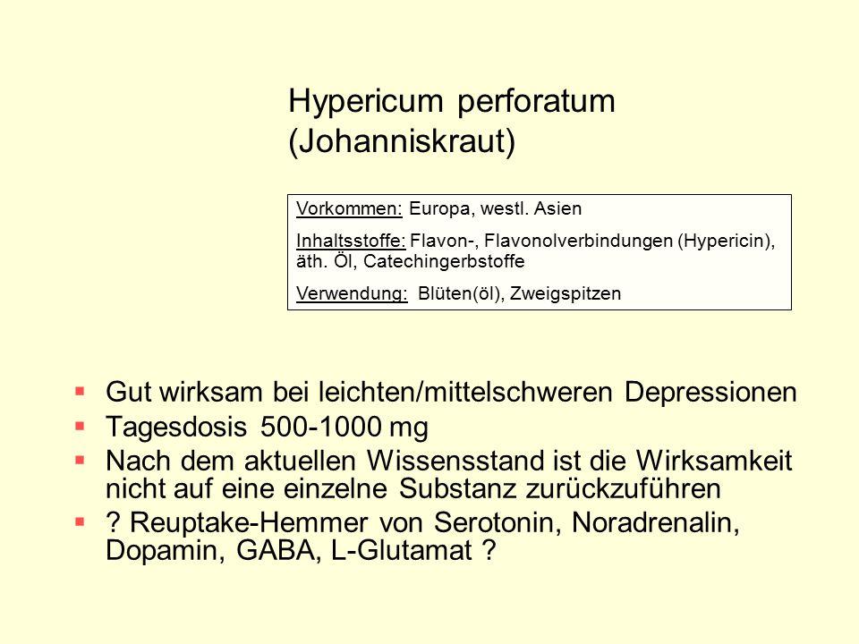 Hypericum perforatum (Johanniskraut)