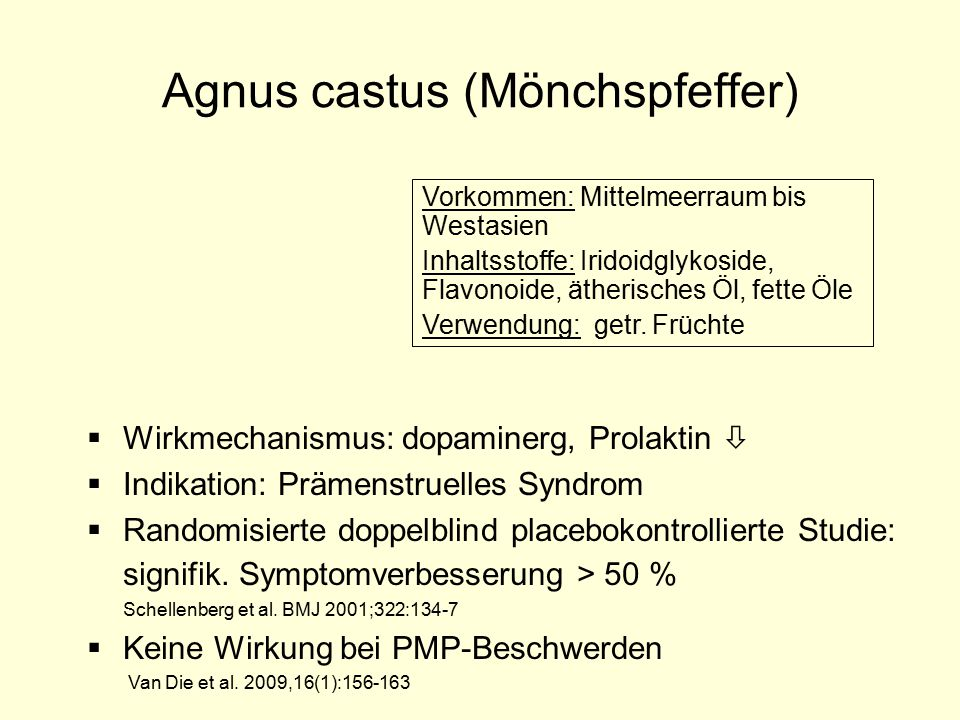 Agnus castus (Mönchspfeffer)