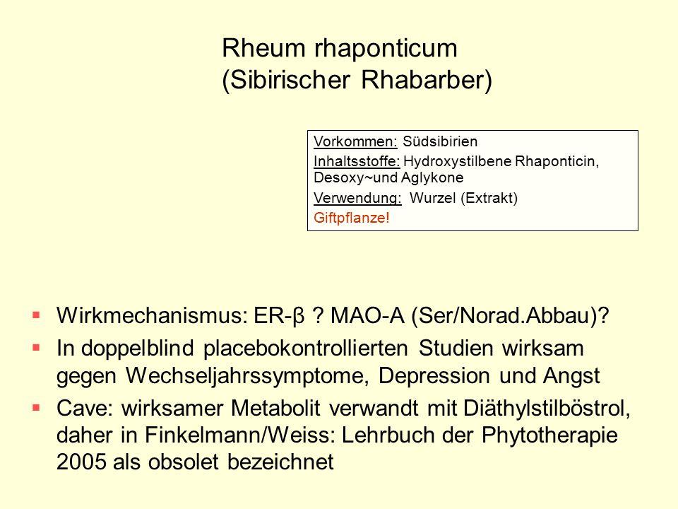 Rheum rhaponticum (Sibirischer Rhabarber)
