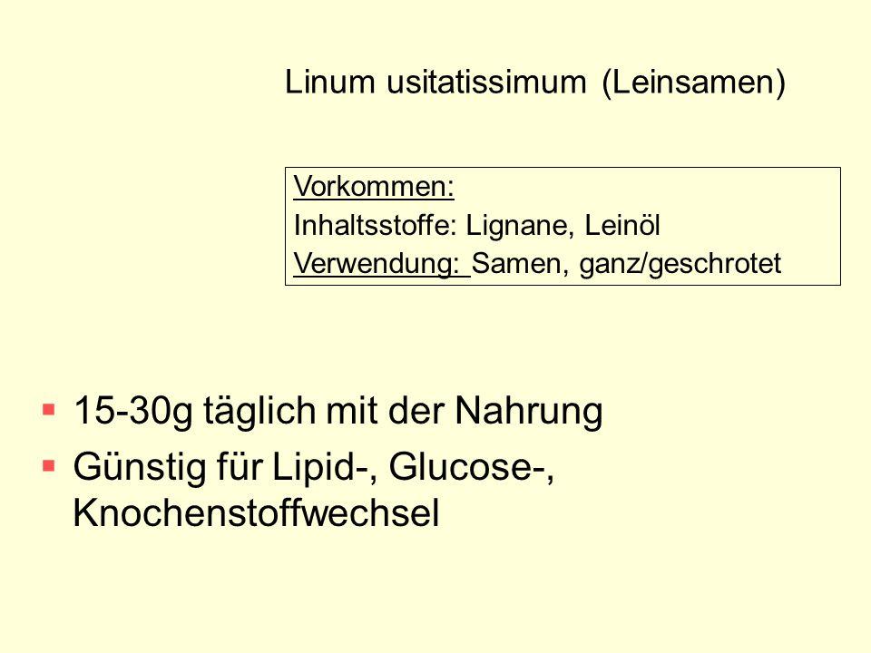 Linum usitatissimum (Leinsamen)