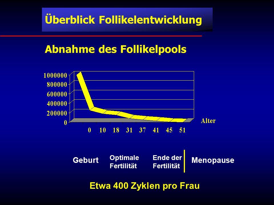 Etwa 400 Zyklen pro Frau Überblick Follikelentwicklung
