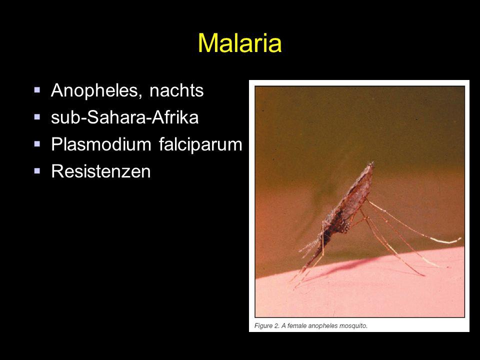 Malaria Anopheles, nachts sub-Sahara-Afrika Plasmodium falciparum