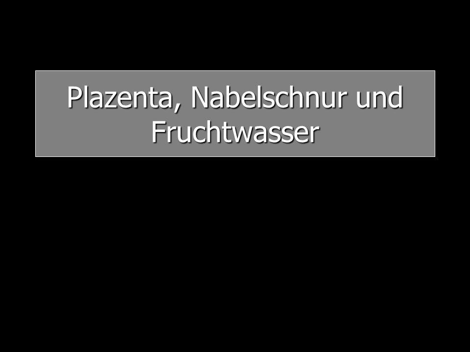 Plazenta, Nabelschnur und Fruchtwasser