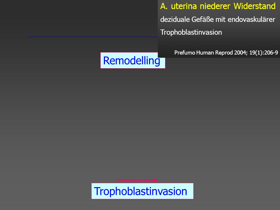 Remodelling Trophoblastinvasion Plugs 4. - 5.SSW 8.- 10.SSW