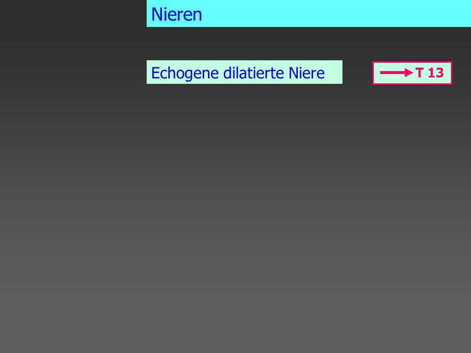 Nieren Echogene dilatierte Niere T 13
