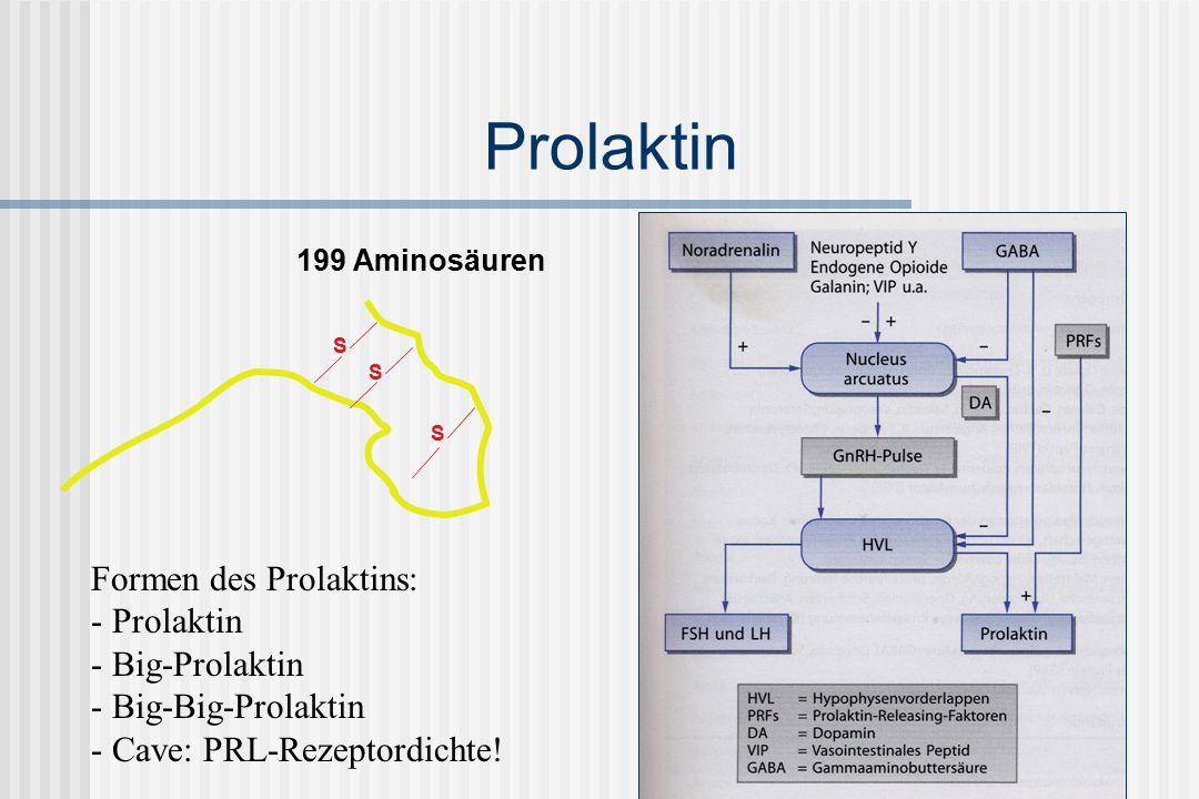 Prolaktin Formen des Prolaktins: Prolaktin Big-Prolaktin