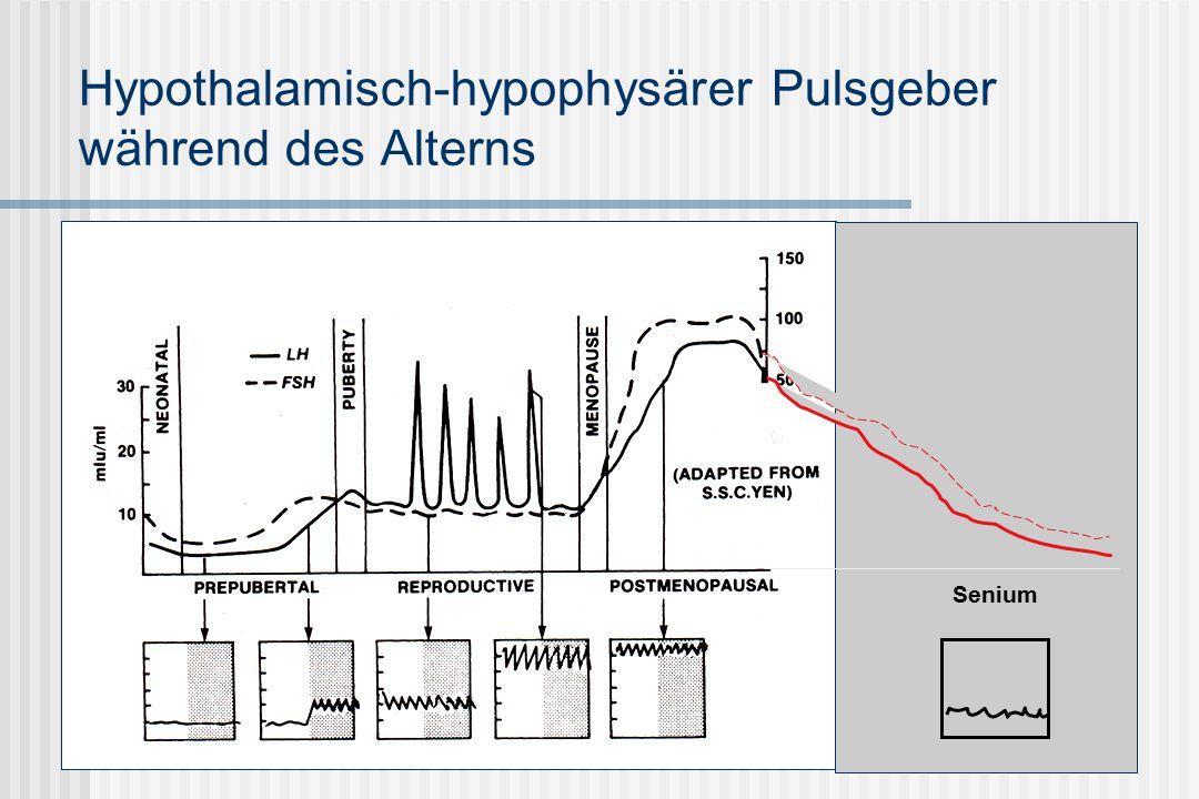 Hypothalamisch-hypophysärer Pulsgeber während des Alterns