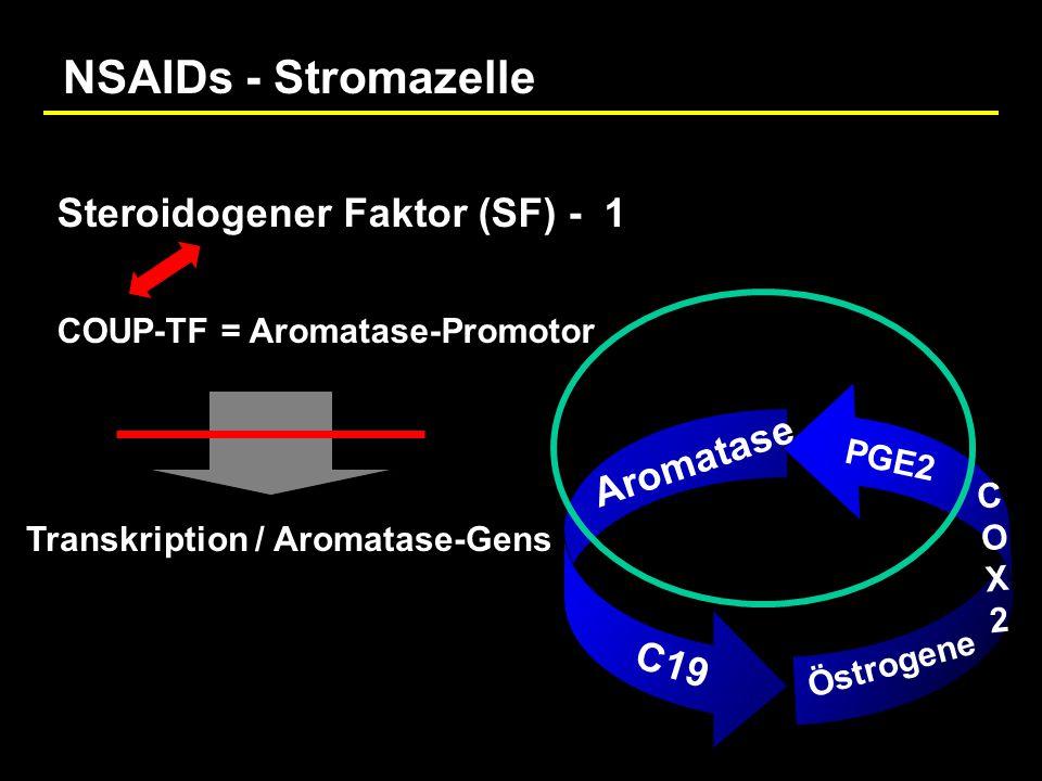 NSAIDs - Stromazelle Steroidogener Faktor (SF) - 1 Aromatase C19