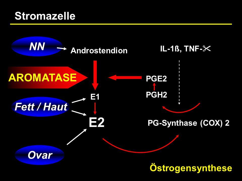 E2 Stromazelle NN AROMATASE Fett / Haut Ovar Östrogensynthese