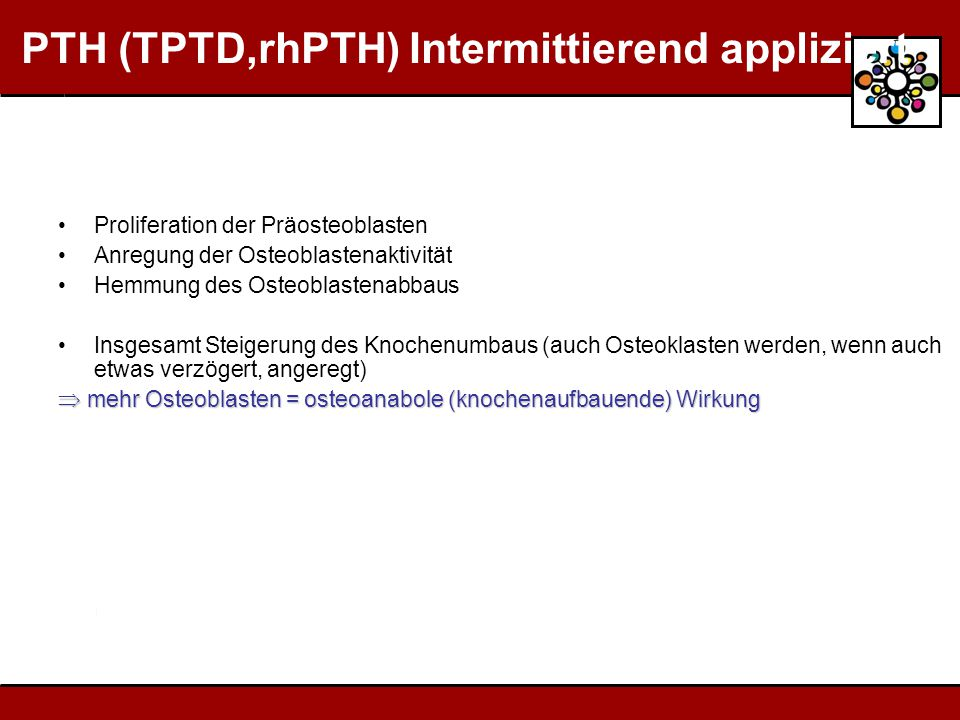 PTH (TPTD,rhPTH) Intermittierend appliziert