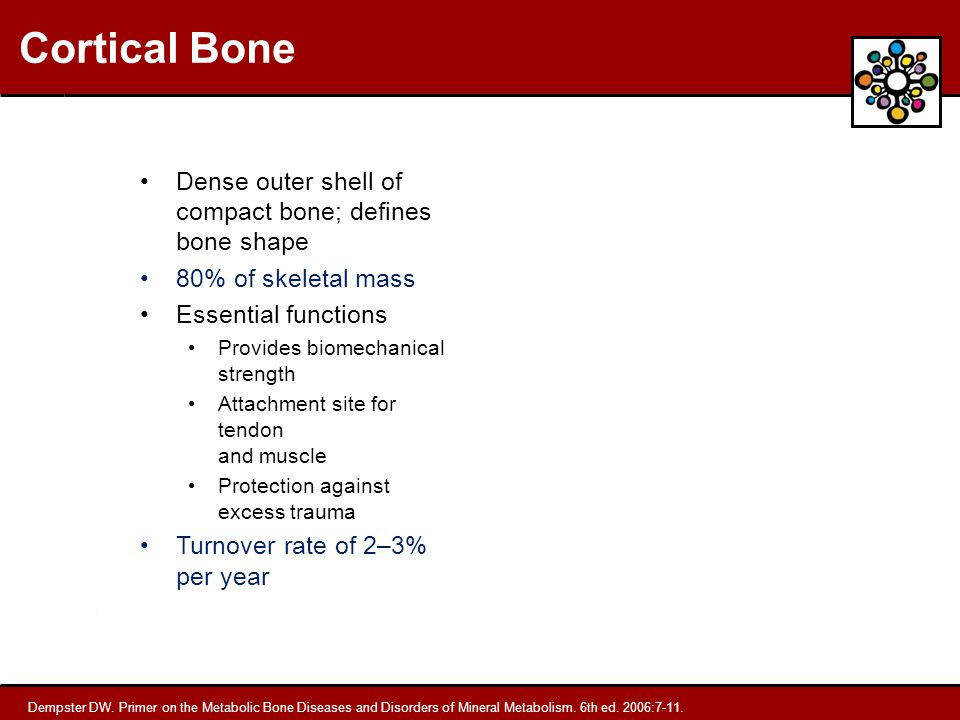 Cortical Bone Dense outer shell of compact bone; defines bone shape