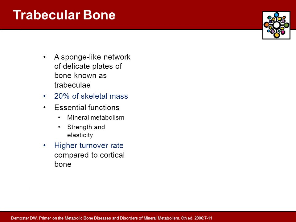 Trabecular Bone A sponge-like network of delicate plates of bone known as trabeculae. 20% of skeletal mass.
