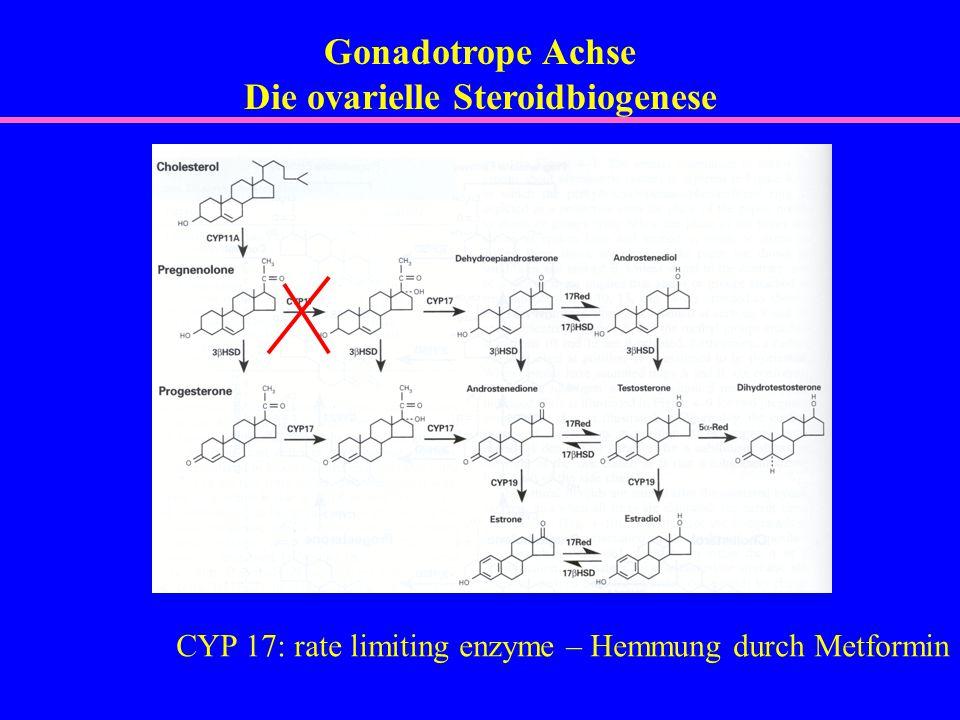 Die ovarielle Steroidbiogenese