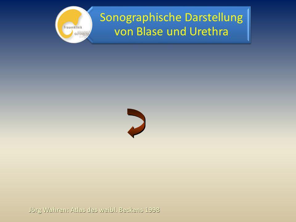 Sonographische Darstellung von Blase und Urethra