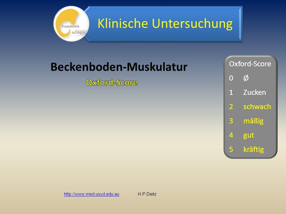 Beckenboden-Muskulatur