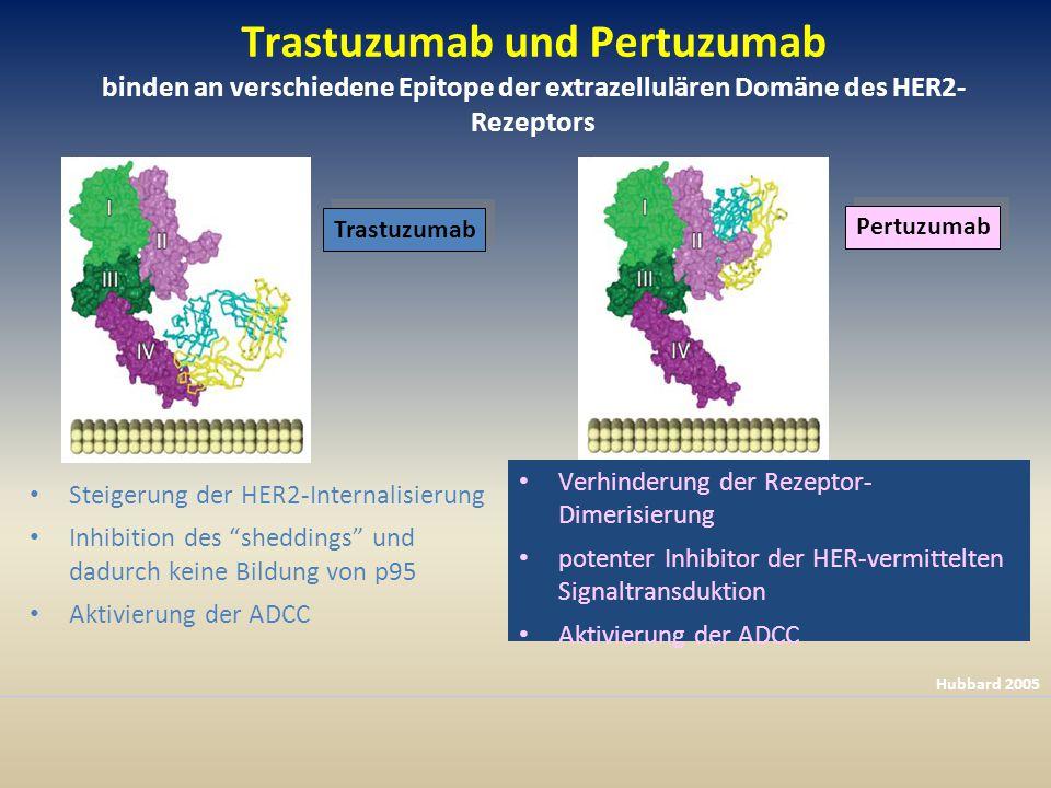 Trastuzumab und Pertuzumab binden an verschiedene Epitope der extrazellulären Domäne des HER2-Rezeptors