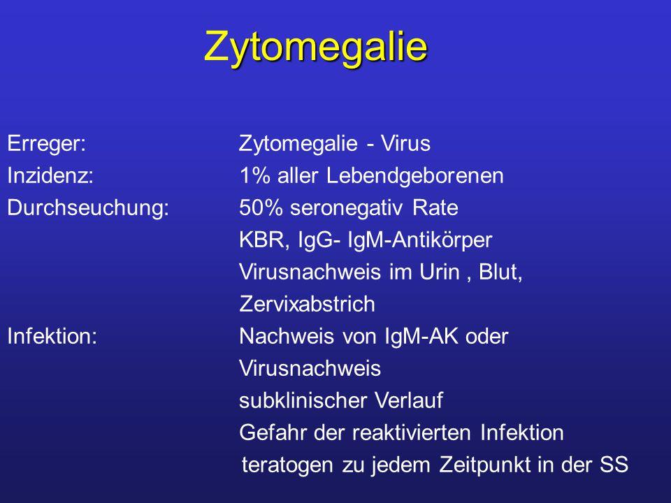 Zytomegalie Erreger: Zytomegalie - Virus