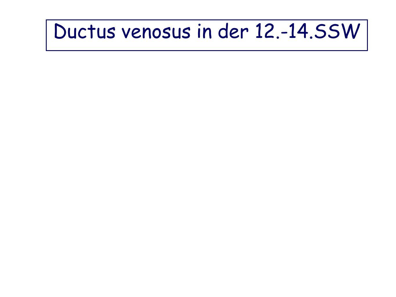 Ductus venosus in der 12.-14.SSW