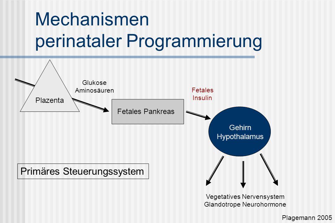 Mechanismen perinataler Programmierung