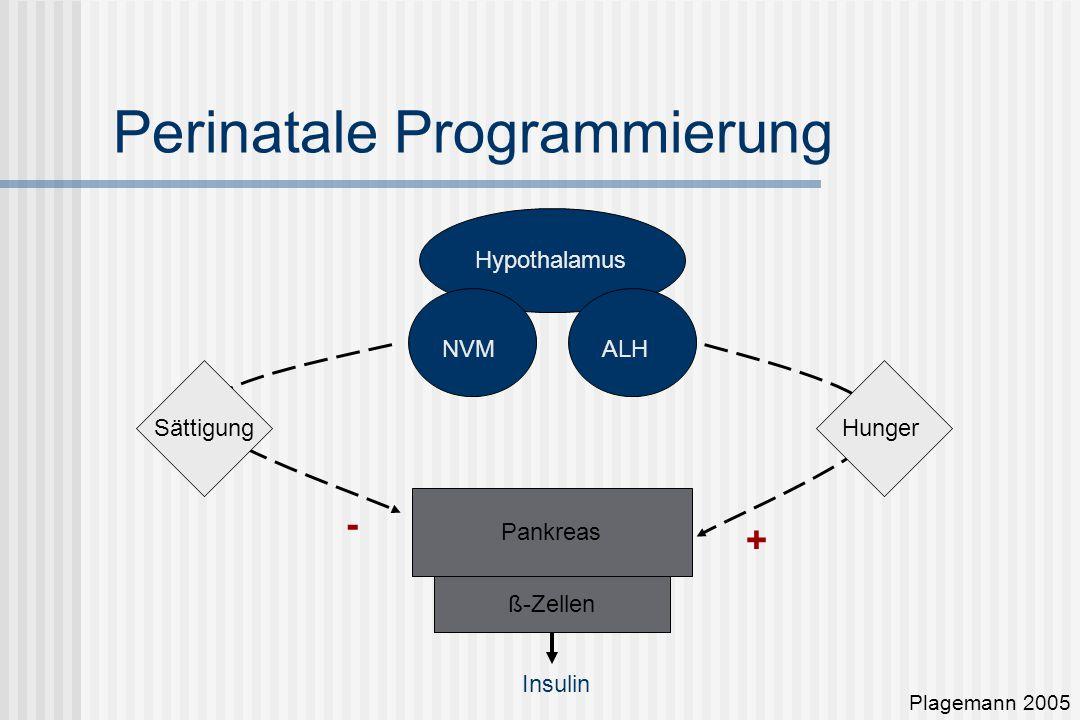 Perinatale Programmierung