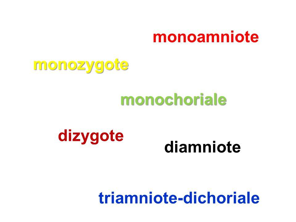 triamniote-dichoriale