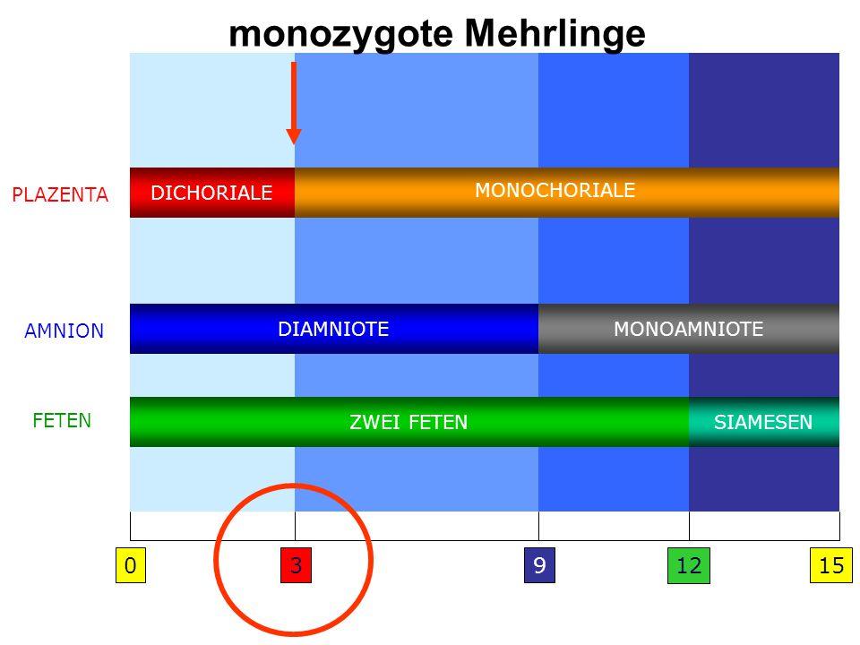 monozygote Mehrlinge 3 9 12 15 DICHORIALE MONOCHORIALE PLAZENTA