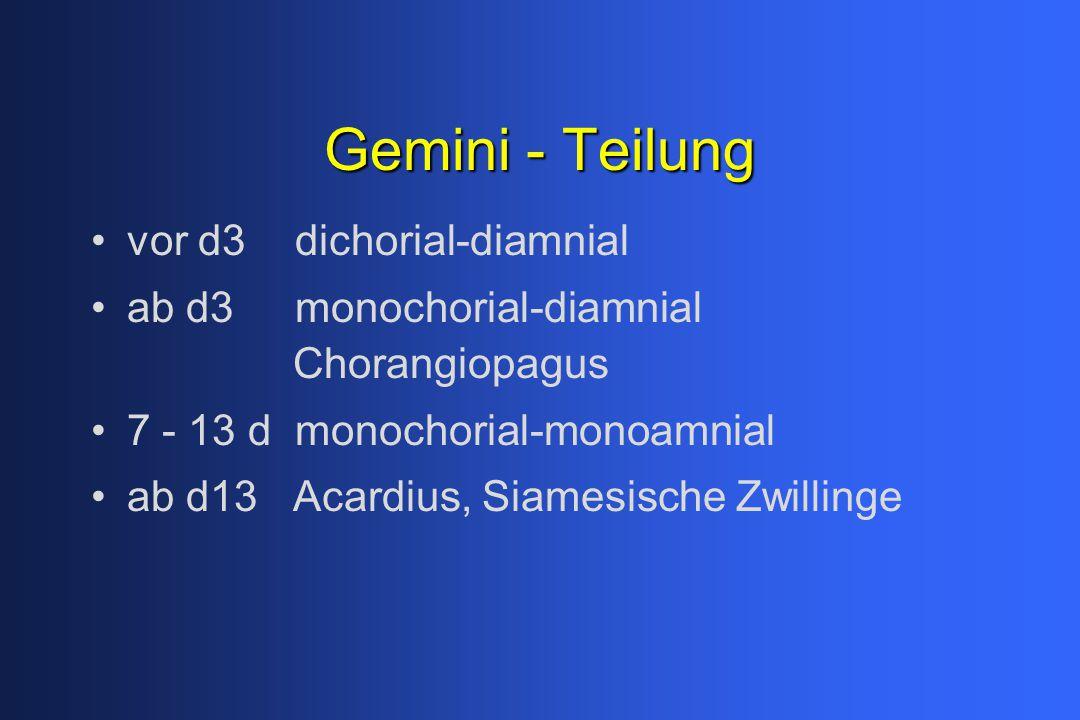 Gemini - Teilung vor d3 dichorial-diamnial