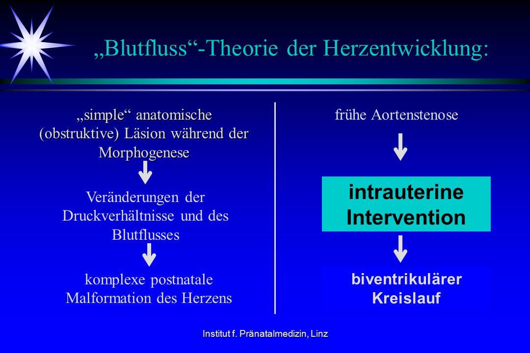 """Blutfluss -Theorie der Herzentwicklung:"