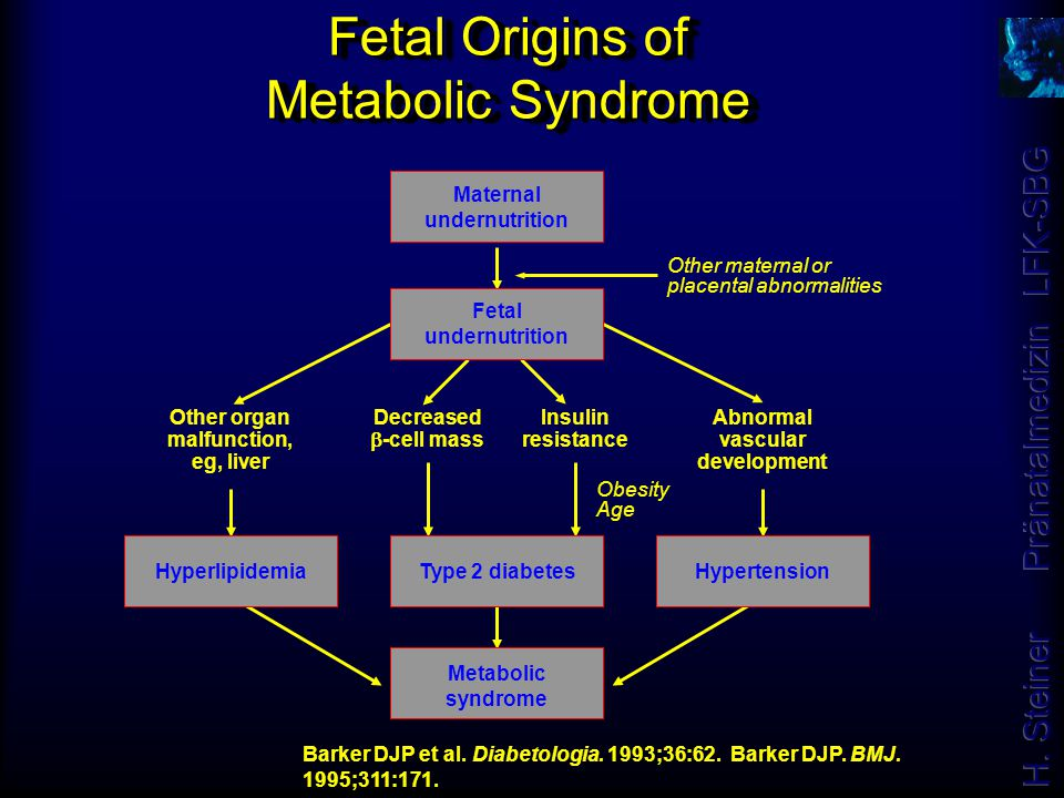 Fetal Origins of Metabolic Syndrome