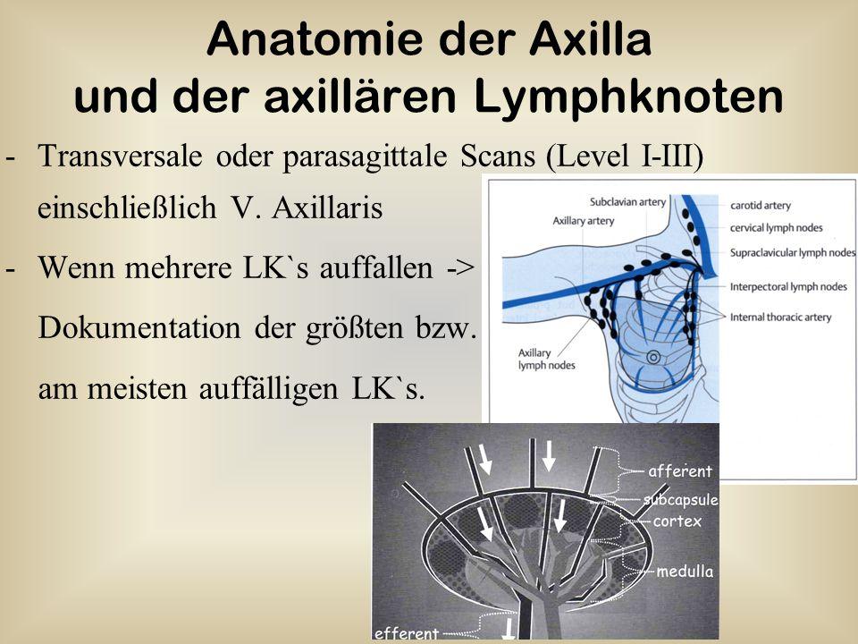 Anatomie der Axilla und der axillären Lymphknoten