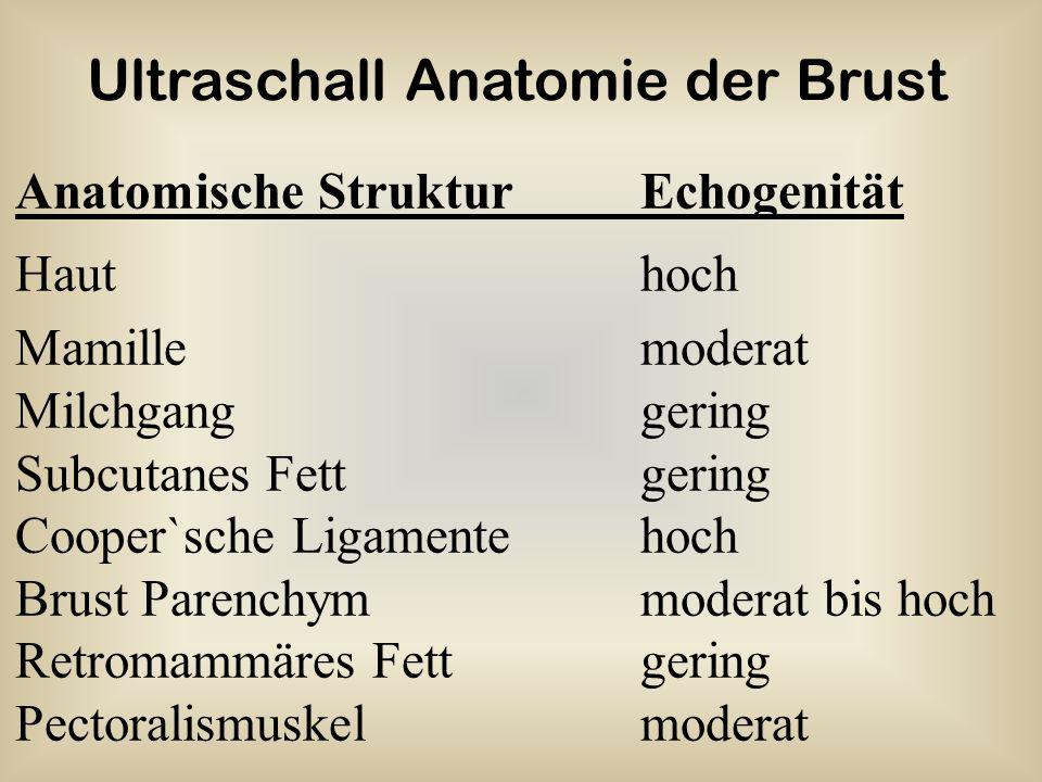 Ultraschall Anatomie der Brust