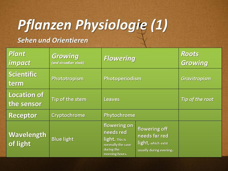 Pflanzen Physiologie (1)