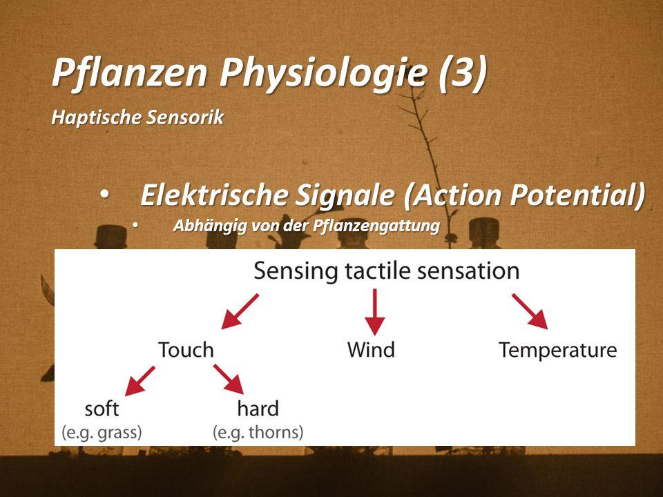 Pflanzen Physiologie (3)