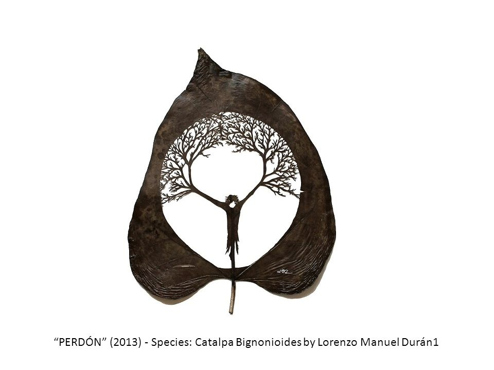 PERDÓN (2013) - Species: Catalpa Bignonioides by Lorenzo Manuel Durán1