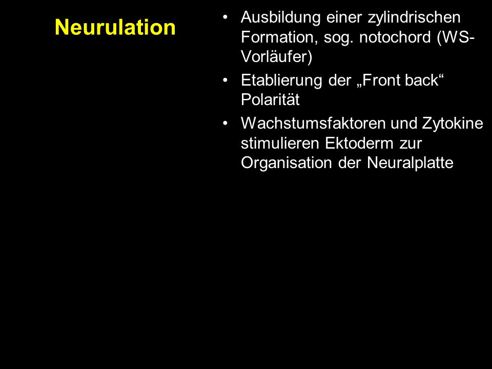 """Neurulation Ausbildung einer zylindrischen Formation, sog. notochord (WS-Vorläufer) Etablierung der """"Front back Polarität."""
