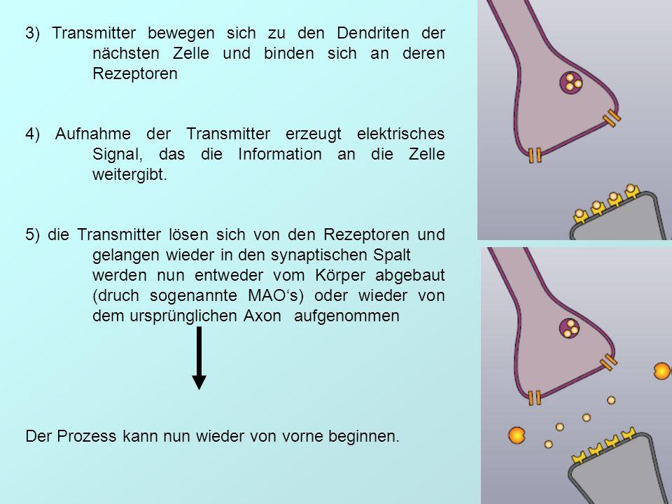 3) Transmitter bewegen sich zu den Dendriten der