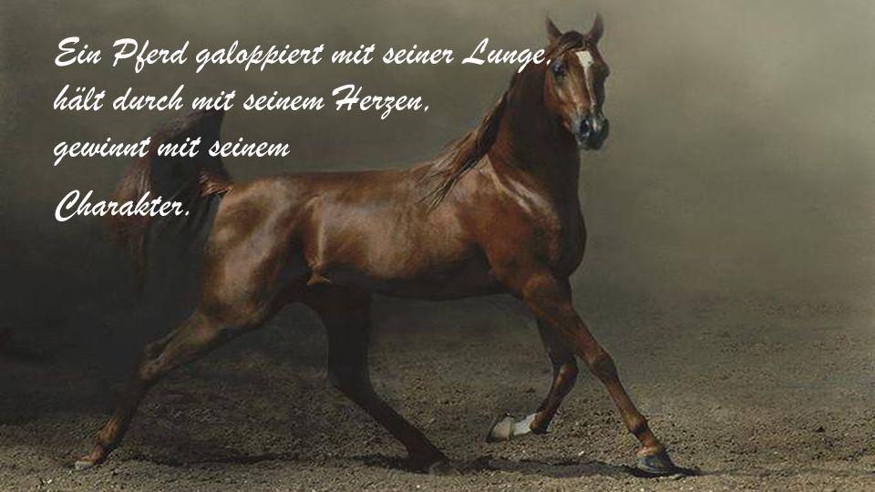 Ein Pferd galoppiert mit seiner Lunge, hält durch mit seinem Herzen, gewinnt mit seinem Charakter.