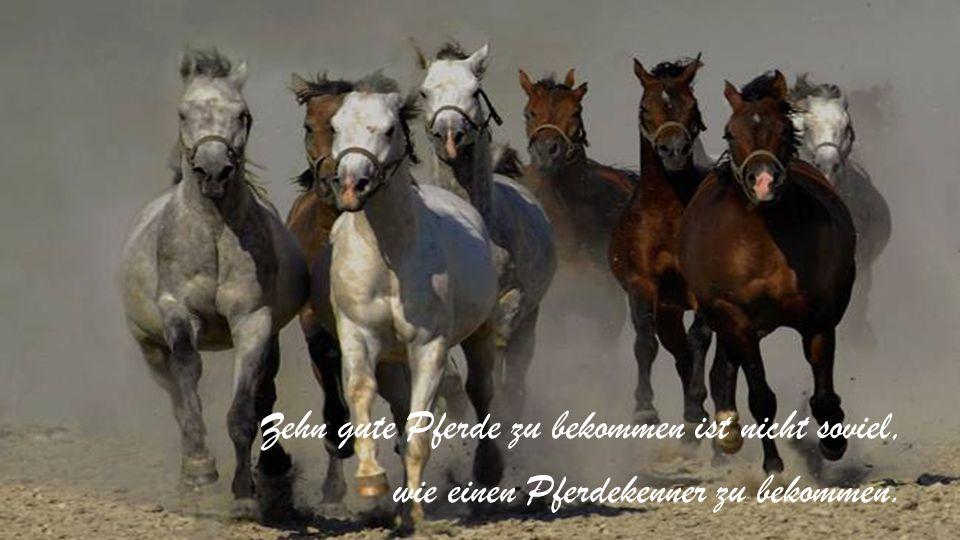 Zehn gute Pferde zu bekommen ist nicht soviel, wie einen Pferdekenner zu bekommen.